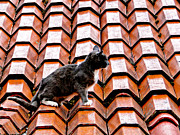 Red Roof Photos - Cat On A Hot Tile Roof by Al Bourassa