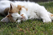 Cat On The Grass Print by Raffaella Lunelli