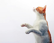 Side View Art - Cat On White Background by Chris Van Dolleweerd