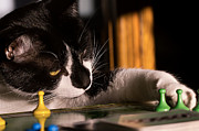 Board Game Posters - Cat Playing a Game Poster by Lori Coleman