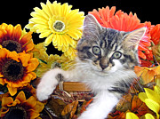 Kitteh Prints - Cat Power - Sassy Kitten Hanging Out While Staring At Me - Thanksgiving Kitty - Falltime Flowers Print by Chantal PhotoPix