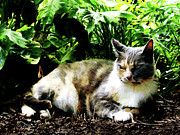 Cats Framed Prints - Cat Relaxing in Garden Framed Print by Susan Savad