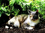 Cat Relaxing In Garden Print by Susan Savad