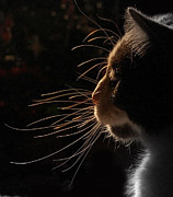 Side View Art - Cat Silhouette by By Laura Zenker/SinglEye Photography