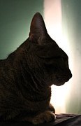 Nina Mirhabibi Photo Metal Prints - Cat Silhouette Metal Print by Nina Mirhabibi