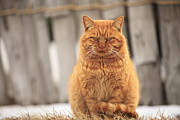 Staring Cat Photos - Cat Sitting by Kakki**