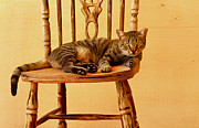 Buying Online Tapestries Textiles Posters - Cat sitting on a chair Poster by Benny  Woodoo