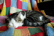 Blanket Prints - Cat sleeping on multicoloured wool blanket Print by Sami Sarkis