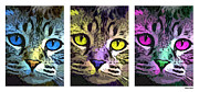 Domestic Cats Digital Art - Cat by Stephen Younts