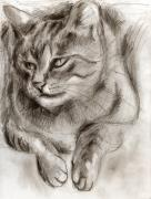 Sepia Drawings Prints - Cat study drawing no one Print by Hiroko Sakai