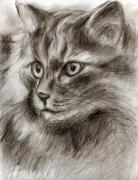 Sepia Drawings Prints - Cat study drawing no two Print by Hiroko Sakai