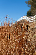 Temecula Prints - Cat Tails and Galloping Fence Print by Peter Tellone