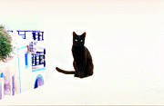 Black Cat Originals - Cat Tale-Santorini by John Galbo