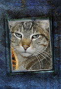 Tabby Cat Photos - Cat Through a Tiny Window by Mary Machare