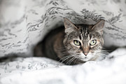 Barcelona Prints - Cat Under In Blankets Print by Image taken by Mayte Torres