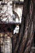 Animal Pics Posters - Cat Up a Tree Poster by John Rizzuto