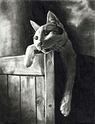 Lounging Drawings Posters - Cat Poster by Vanessa Anderson