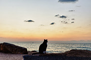 Buying Online Tapestries Textiles Posters - Cat watching the sunset Poster by Benny  Woodoo
