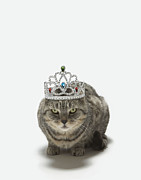 Tiara Framed Prints - Cat Wearing A Tiara Framed Print by Tim Macpherson