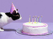Party Hat Posters - Cat Wearing Birthday Hat Blowing Out Candles On Birthday Cake Poster by Steven Puetzer