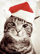 Domestic Animals Posters - Cat Wearing Christmas Hat Poster by Michelle McMahon