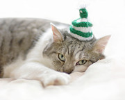Striped Prints - Cat Wearing White Striped Knitted Hat Print by Ineke Kamps