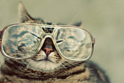 Cat With Glasses Print by Sara Miedema
