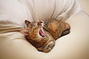 Bedroom Prints - Cat Yawn On Bed Print by Junku