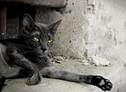 Photography Of Black Cats Photos - Cat by Zuzanna Nasidlak