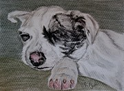 Sleeping Dog Drawings Prints - Catahoula Pup  Print by Joan Pye