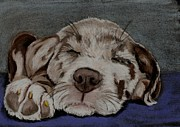 Pup Pastels Framed Prints - Catahoula Puppy Framed Print by Joan Pye