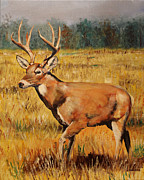 Deer Camp Framed Prints - Catch Me If You Can Framed Print by Karl Wagner