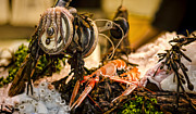 Lobsters Photos - Catch of the Day by Heather Applegate