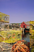 Lobster Traps Framed Prints - Catch of the Day Framed Print by Joann Vitali