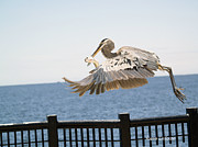 Birdseye Photo Metal Prints - Catch of the Day Metal Print by Karen Devonne Douglas