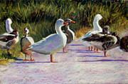 Canadian Geese Paintings - Catchin Some Rays by Char Wood