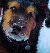 Dog Portraits Pastels Prints - Catching Snowballs Print by Billie Colson