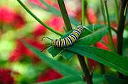 The Cupcake Gallery - Caterpillar Before The Butterfly 1 by Andee Photography