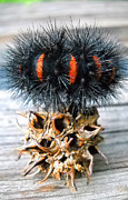 Alien Bug Photos - Caterpillar Seed by Duwayne Washington