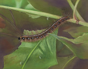 Insects Pastels Posters - Caterpillar Poster by Sharon Allen
