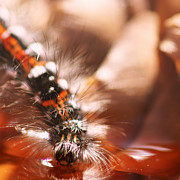 Miniature Photo Originals - Caterpillar by Vincent Van Impe