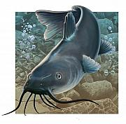 Catfish Digital Art Prints - Catfish Print by Valerian Ruppert