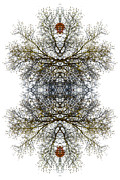 Lacy Fractal Posters - Cathedral Glass Poster by Debra and Dave Vanderlaan