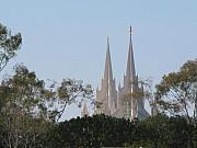 Robert Bissett - Cathedral