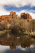 Cathedral Rock Photo Prints - Cathedral Rock Reflections Portrait 1 Print by Darcy Michaelchuk