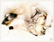 Cute Cat Digital Art Posters - Catnap Poster by Gun Legler