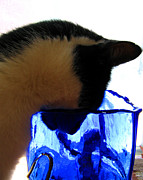 Leela Arnet - Cat