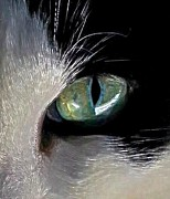 Tuxedo Cat Digital Art - Cats Eye by Dale   Ford