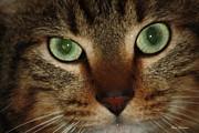 Cat's Eye Print by Yumi Johnson