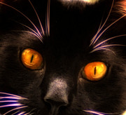 Cat Posters - Cats Eyes Poster by Bill Cannon